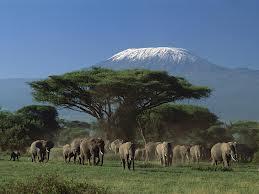 Екскурсії в Кенії