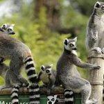 ТОП-7 пам'яток Мадагаскару