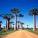 Що можна побачити на Мадагаскарі