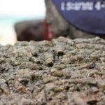Кладовище морських черепашок Сусан Хой