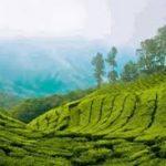 Що подивитися в Кералі