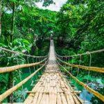 Реліктовий ліс Анага